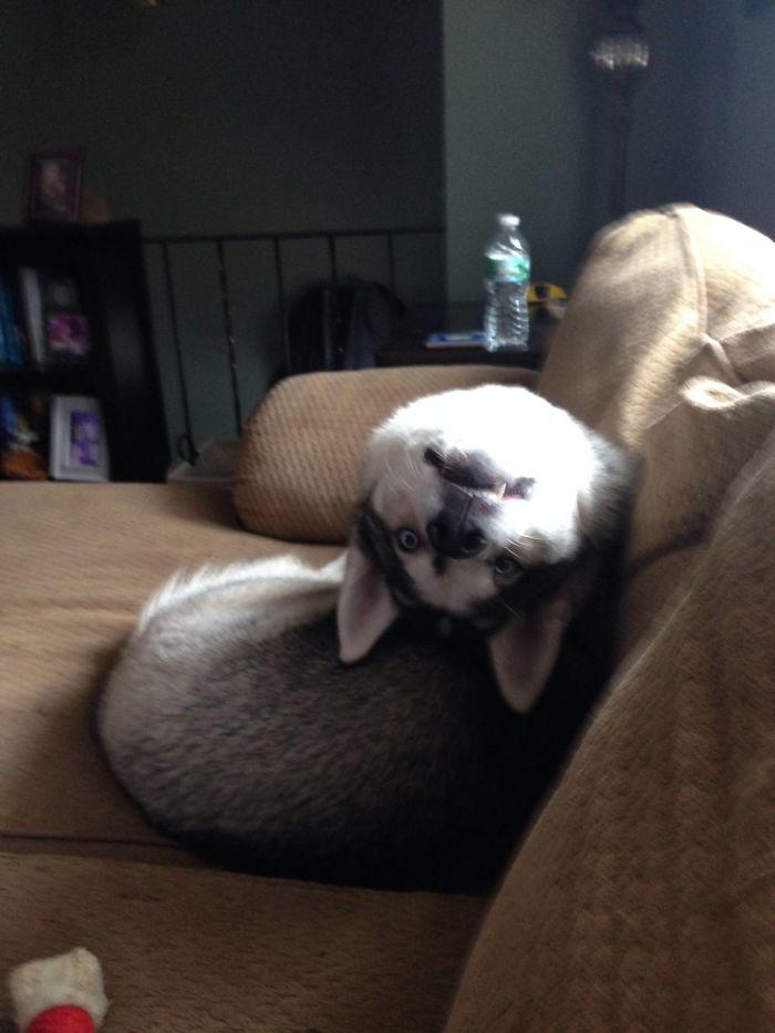 husky flexible neck