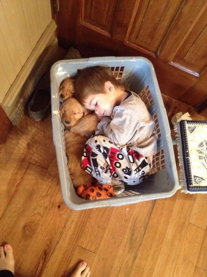 kid and retriever puppies