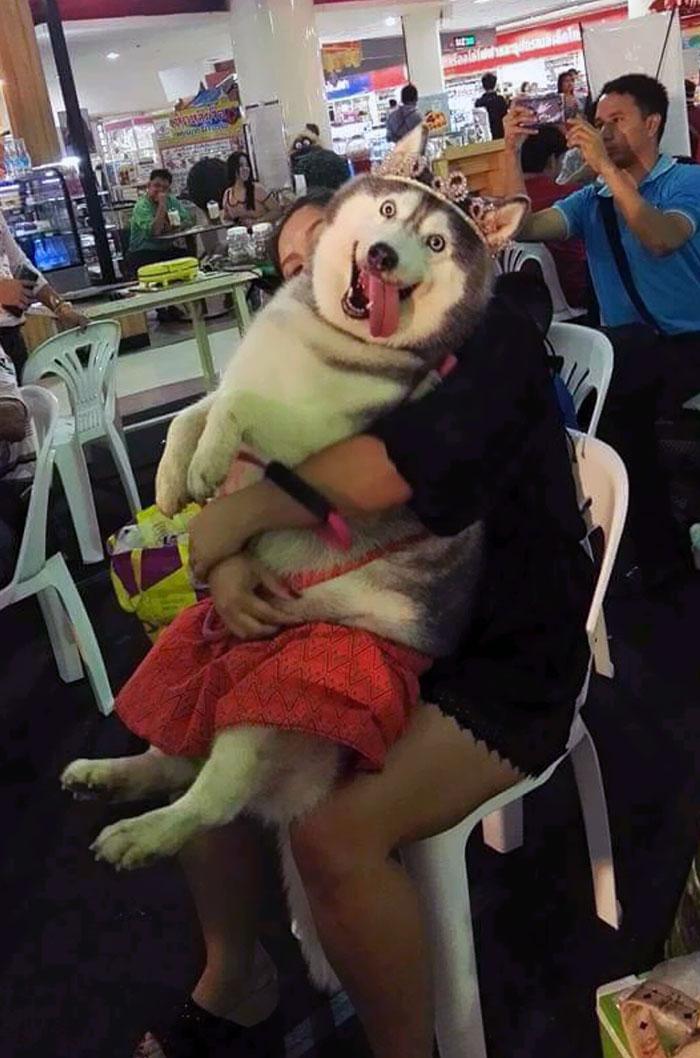princess husky