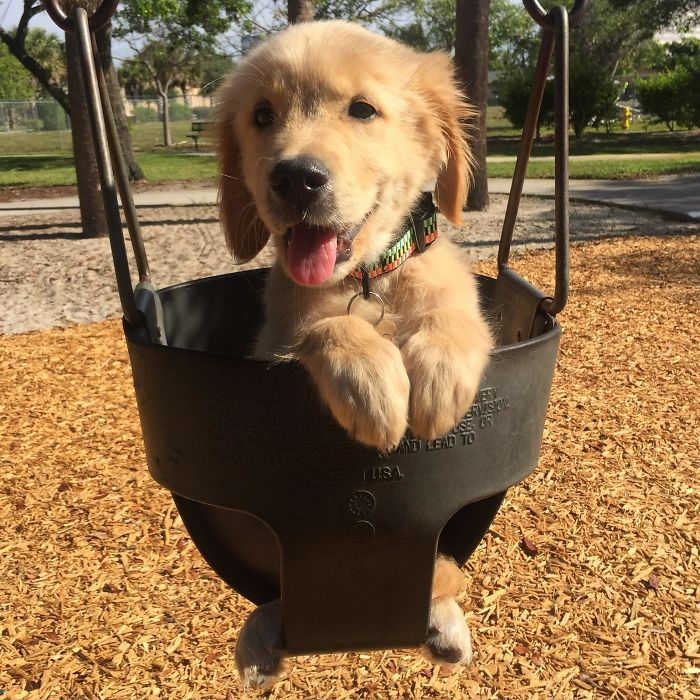 puppy loves the park