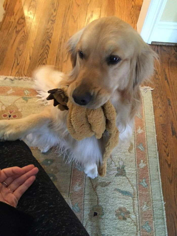 sweet dog gives gifts