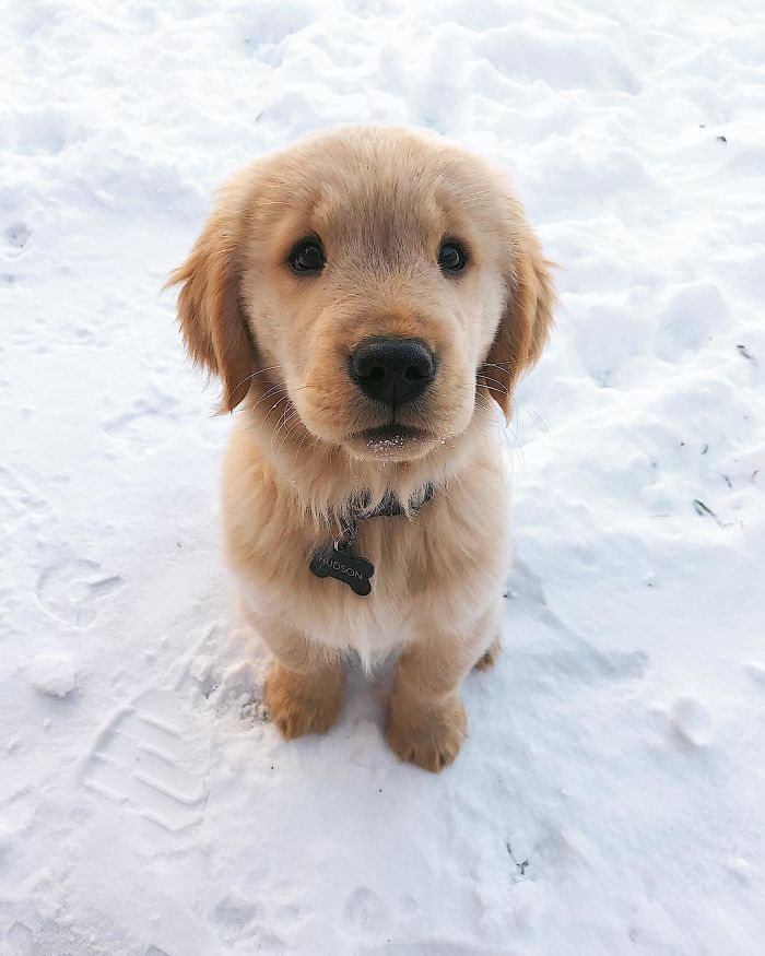 this is how you do puppy eyes
