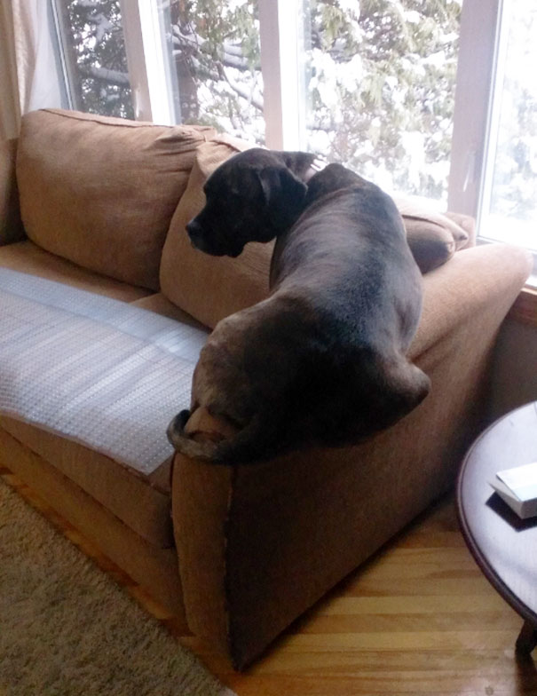 you said couch not arm of the couch
