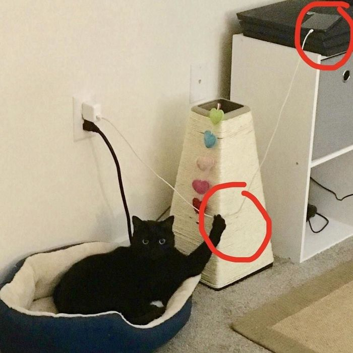 cat attempts to pull the wire