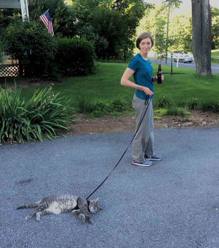 cat doesn't want to walk