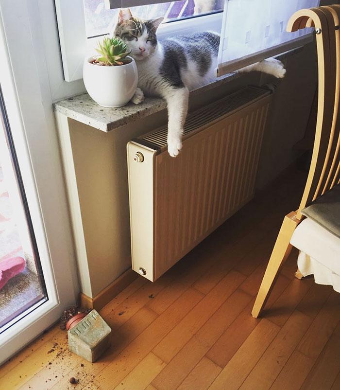 cat drops the plant