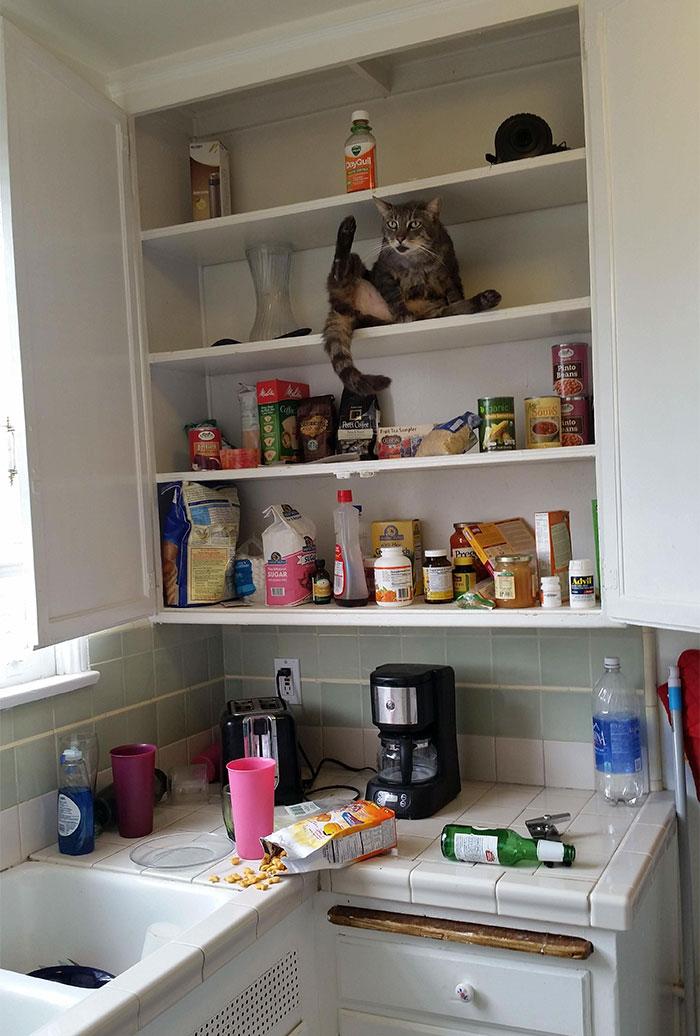cat raids your pantry