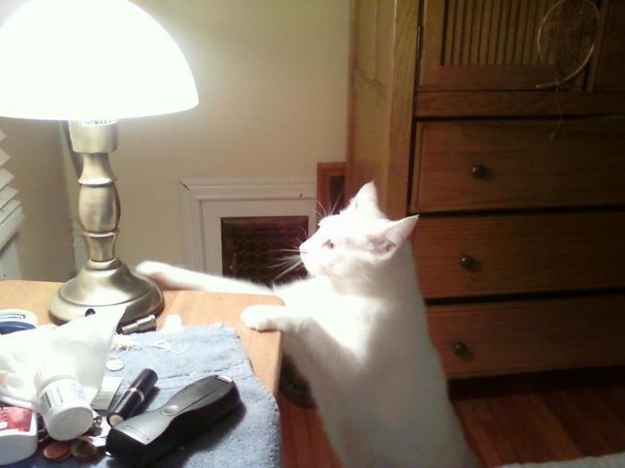 cat turns on touch lamps to wake up owner