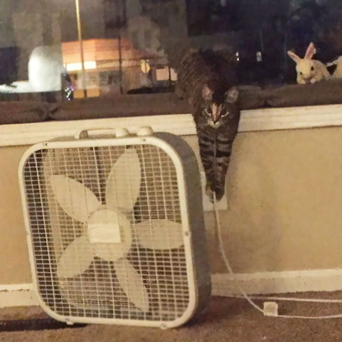 cat unplugs the fan