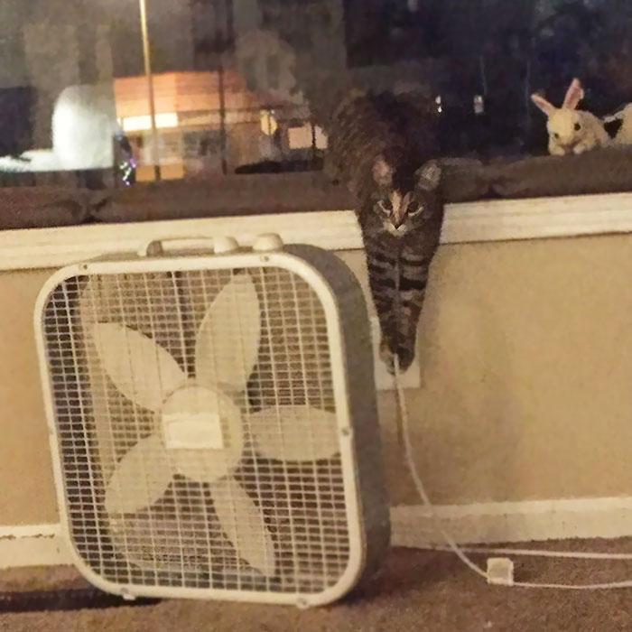 cat unplugs the fan