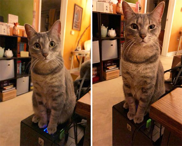 cat's twitching eye with paw on the button