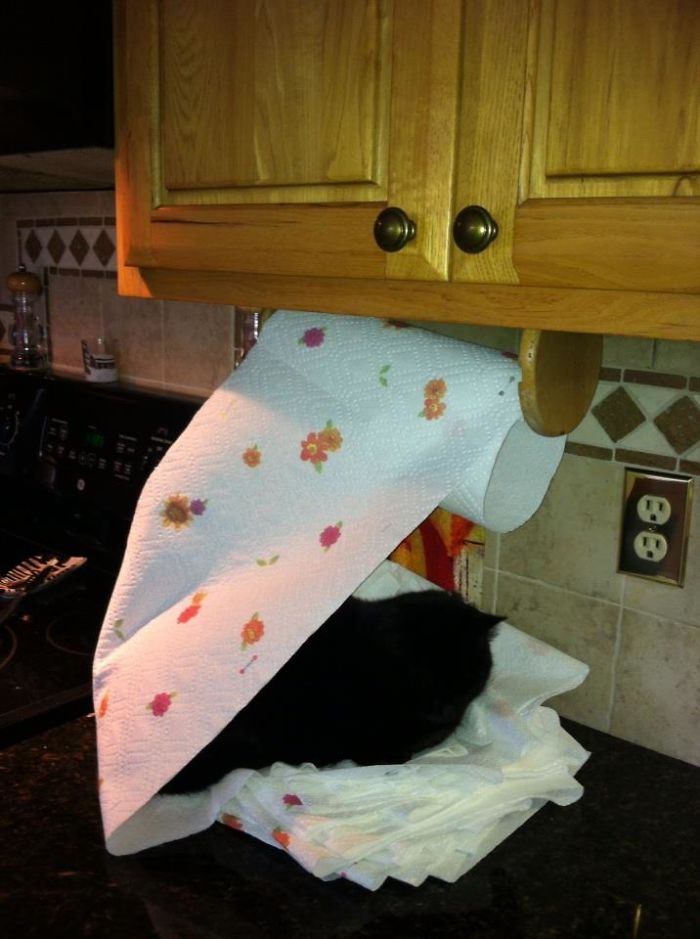 clever cat creates a bed out of tissue