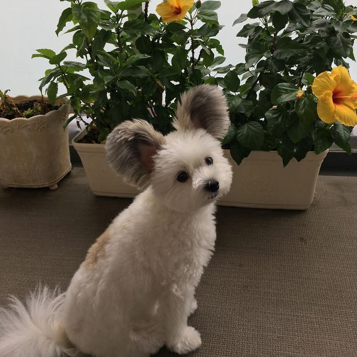 cutest goma