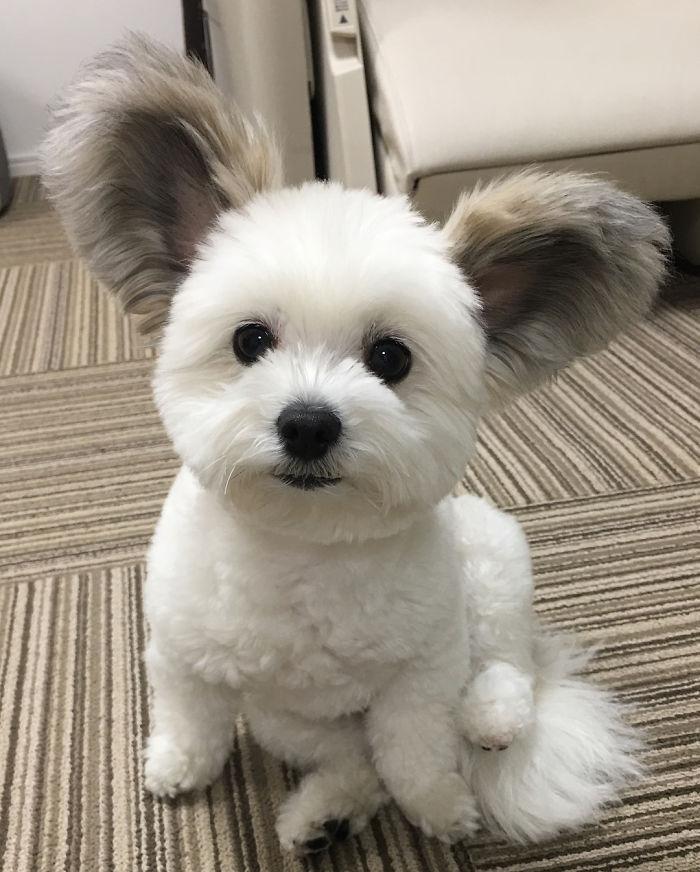 fluffy goma