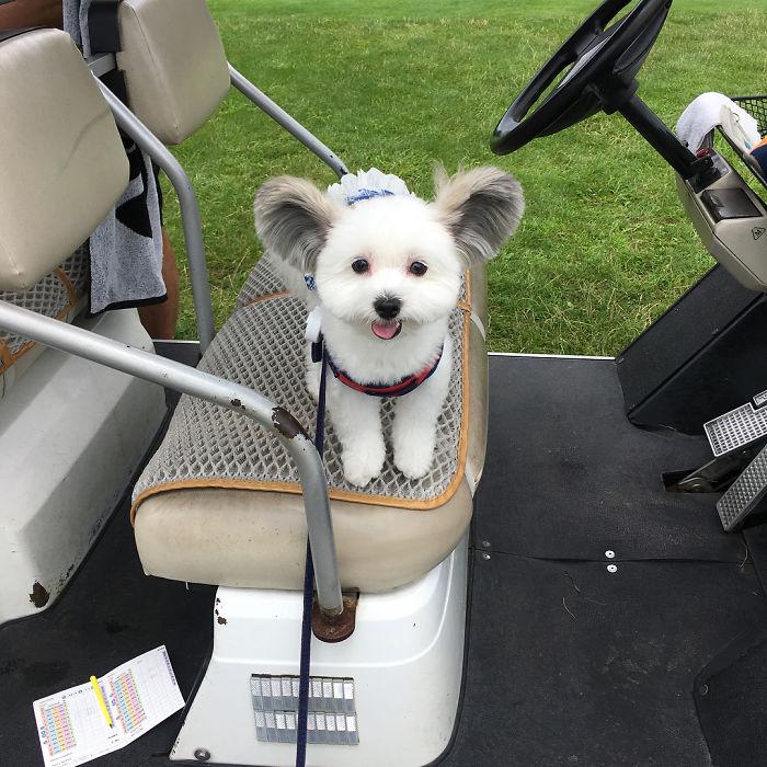 goma golfing