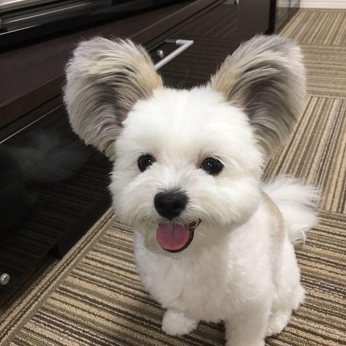 goma looks like a teddy