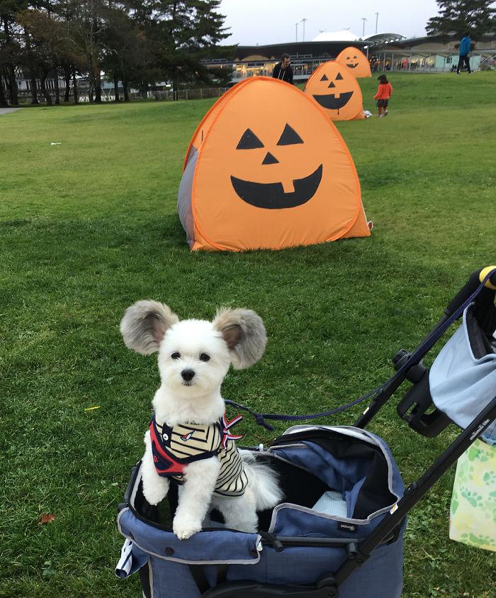 goma walk in the park