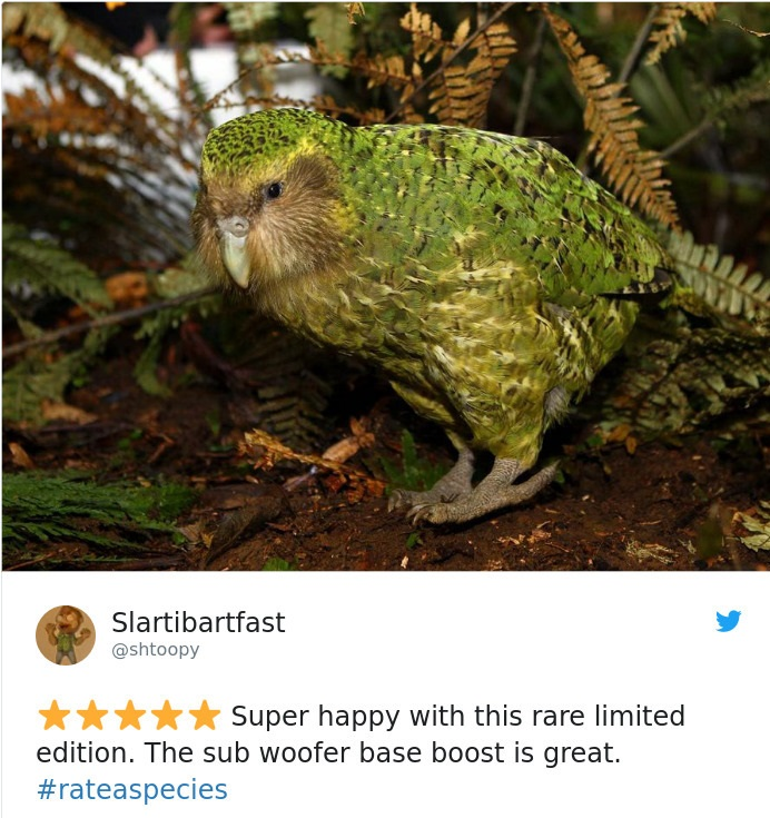 kakapo - a parrot that cannot fly