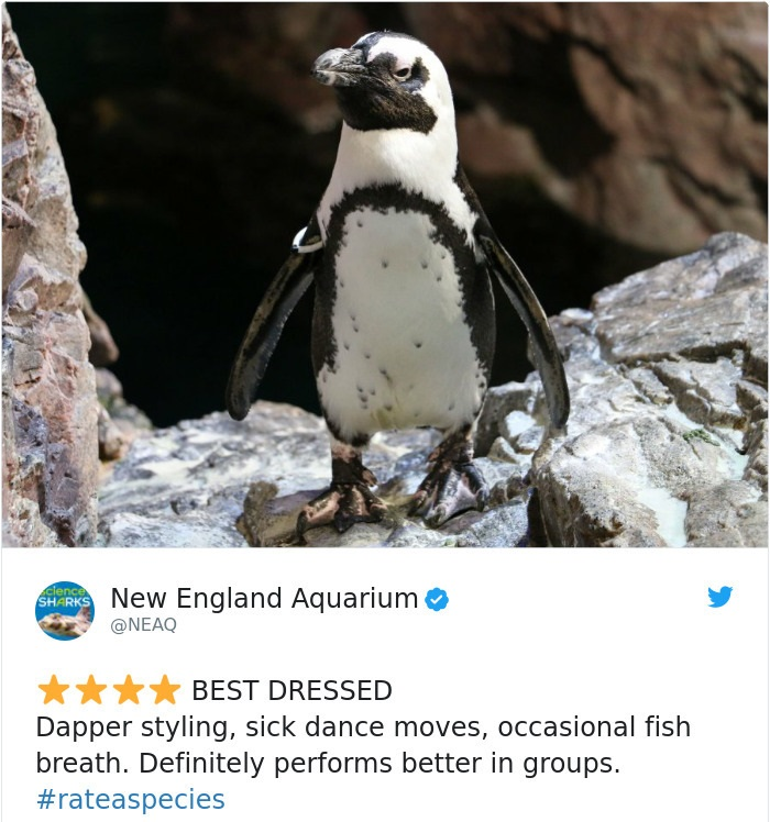 penguin - james bond in disguise