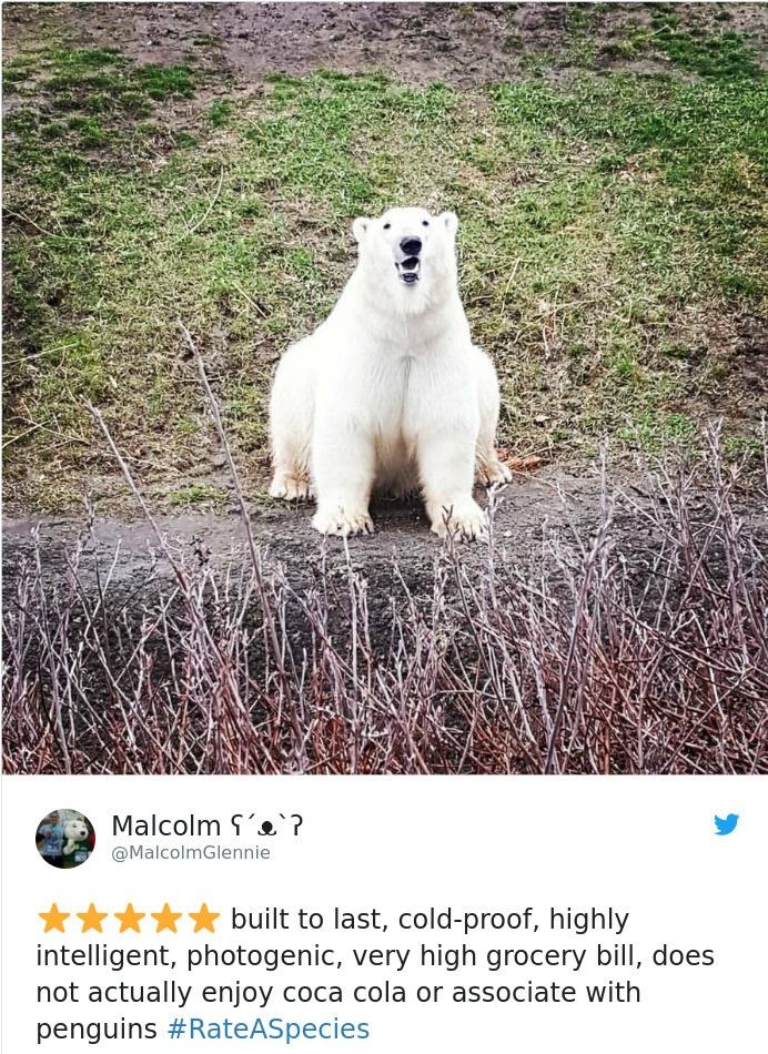 polar bears - coca cola is a lie
