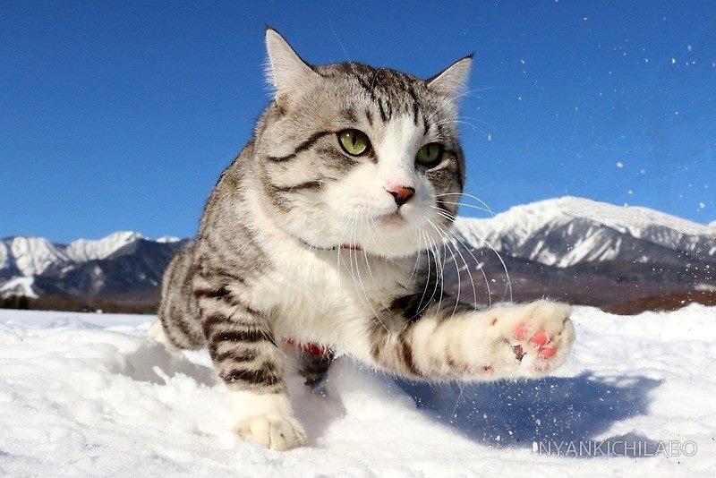 Nyankichi Snow