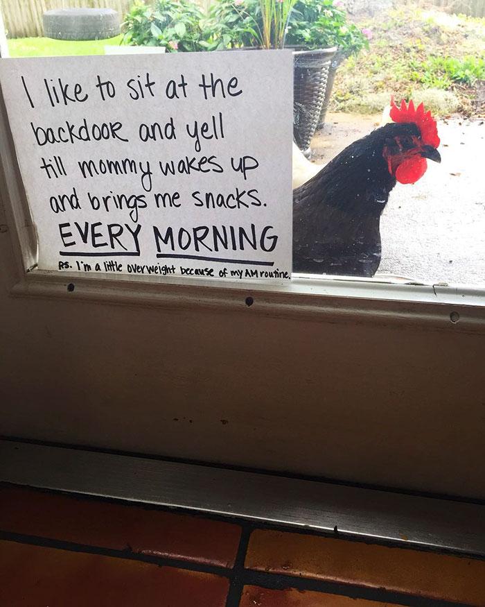backdoor chicken