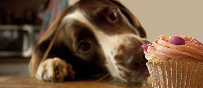 """Coffee or tea? Cakes or Pets? Well, actually, you don't have to choose as you can enjoy all of them at an event organized by Blue Cross. The fundraising event is called """"Paws for Tea"""" and will be held at Grimsby animal hospital on May 26 from noon to 3pm. The event's main purpose is to raise money for the sick, injured, and homeless pets. You're not just enjoying cakes, coffee, and, tea. You will also get a chance to help cute homeless pets. There will also be a crew of animal mascots going around for """"selfie"""" opportunities. Blue Cross will also be offering microchipping of cats and dogs and even mini healthchecks for all pets by donation. Jill Smith from the animal hospital, shared: """"We are inviting people to join us in raising a toast to the recent Royal wedding of Prince Harry and Meghan Markle with a slice of cake and a cuppa. All money raised will help the pets in Blue Cross care – every penny really does make a difference."""" You may check out their site for more details of the event. Meanwhile, take a look at these adorable photos of pets enjoying their own drink and dessert."""