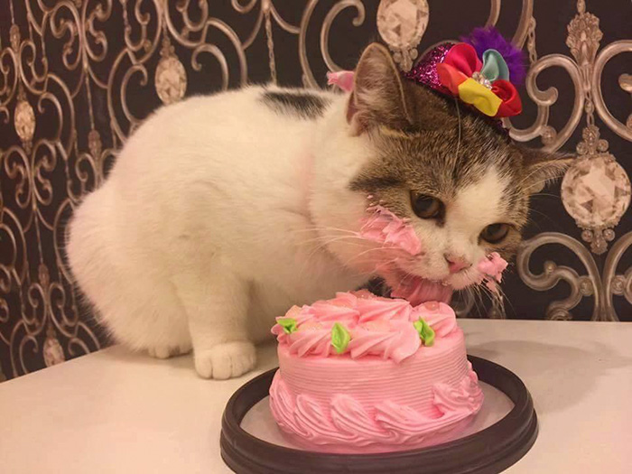 cutie cat eating bday cake