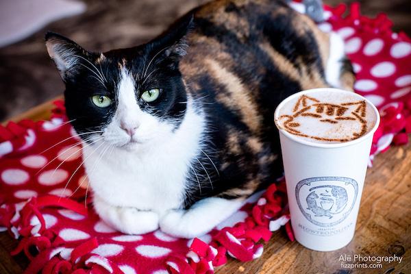 here's a cat in meowtropolitan seattle