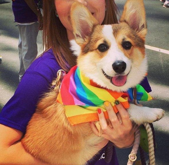 adorable dog support pride