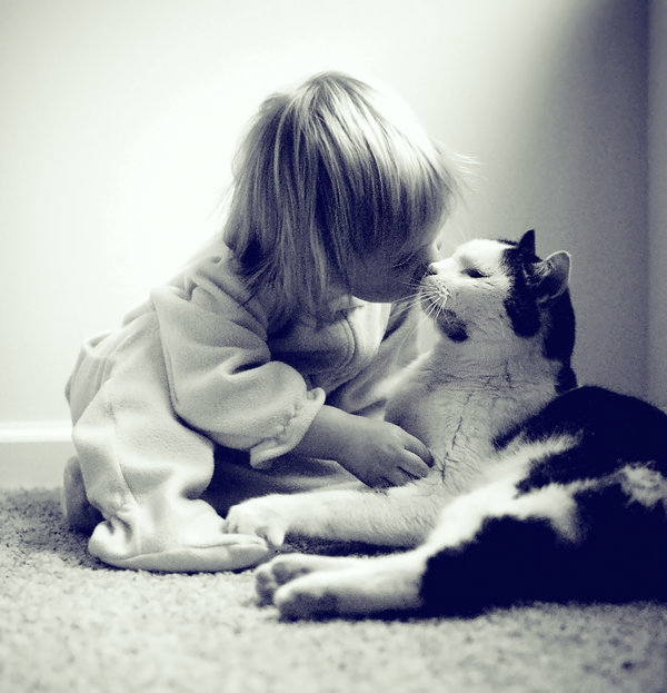 Toddler cuddling with a cat.