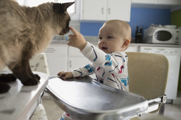 baby touching cat's face