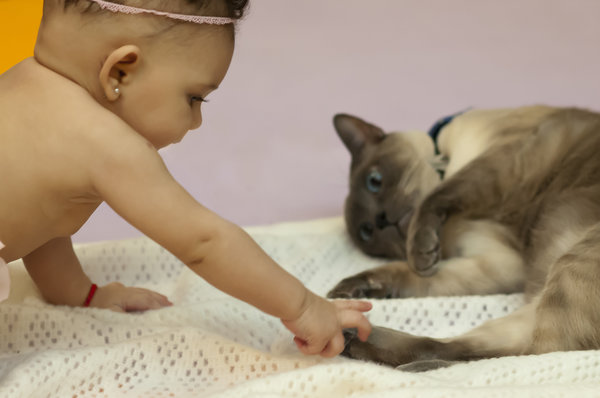 Cute baby girl touching a cat.