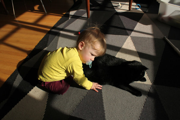 Toddler resting face gently on his pet cat.