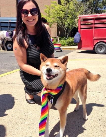 dog in pride scarf