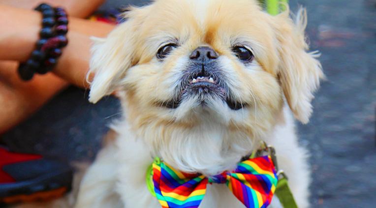 dog in rainbow bow