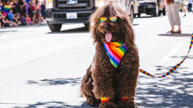 dog in rainbow shades