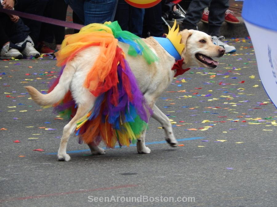dog rainbow skirt pride dog