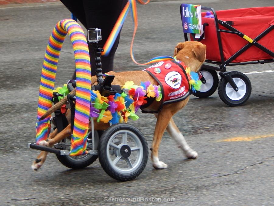 dog rescue pride