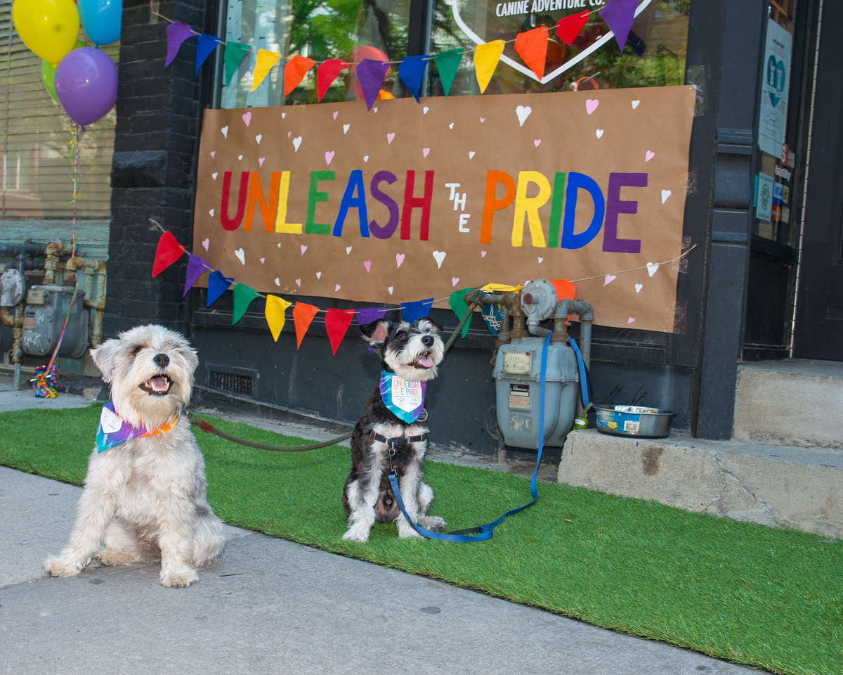 dog unleash the pride