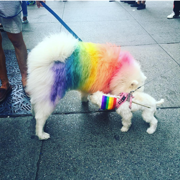 fluffy dog in colored fur