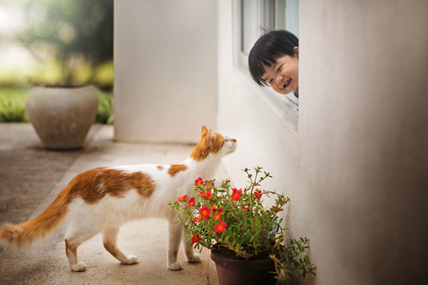 Asian toddler boy smiling to a cat walking closer. Friendship of toddler at home and a domestic cat.