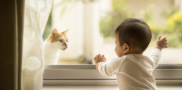 Asian Toddler waving, looking at a stray cat through window. Horizontal view.