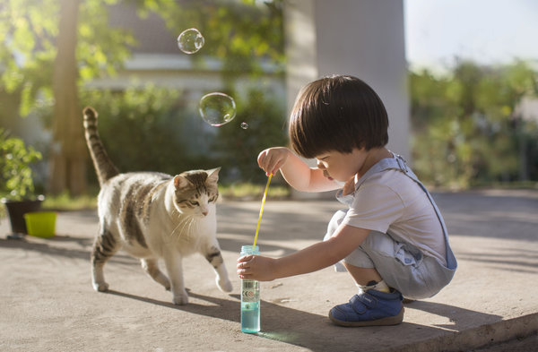 Asian toddler boy 2 to 3 years old making bubbles in the garden with pet cat.