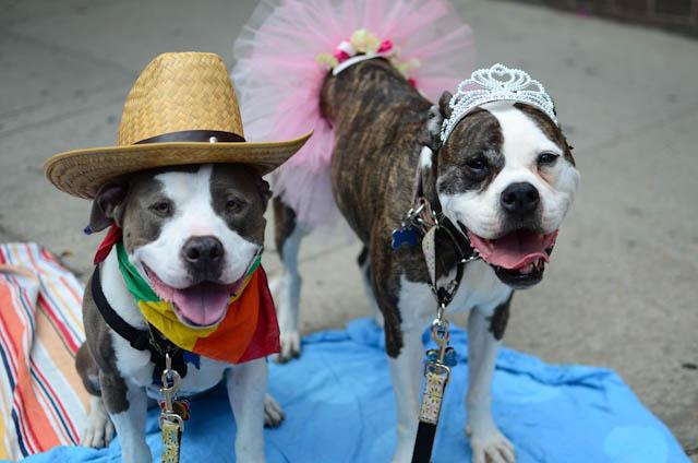 princess and cowboy dog