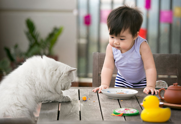 One asian toddler and a white coat cat looking at a small piece of mooncake left on table.