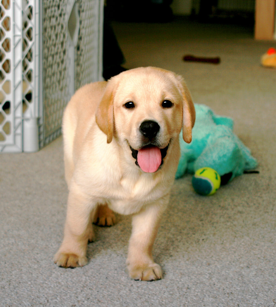 smiling pup