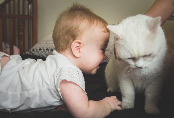 baby girl and white pet cat having fun