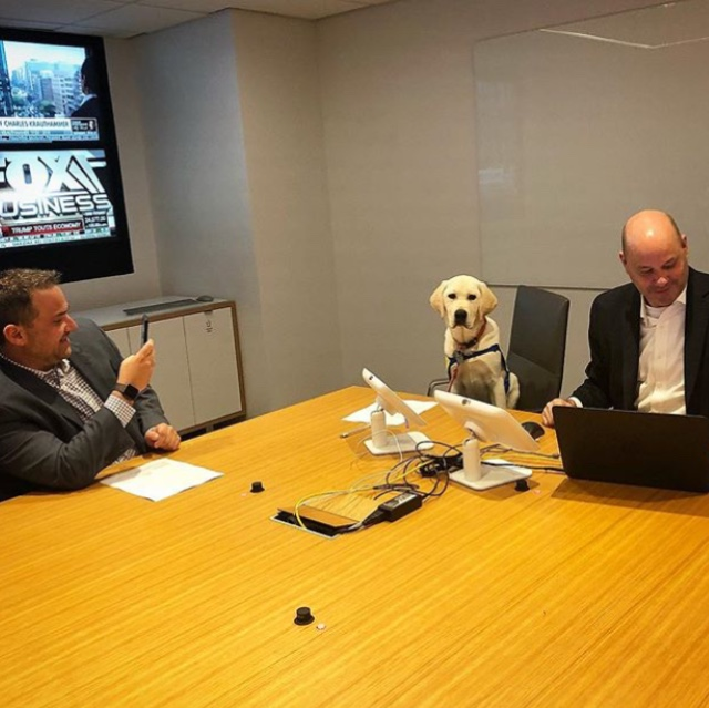 Dog attending meeting