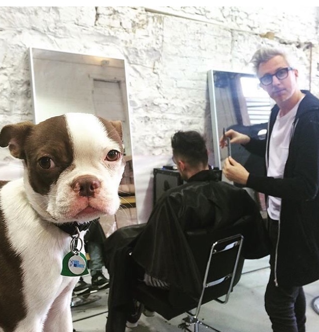 Dog barber shop